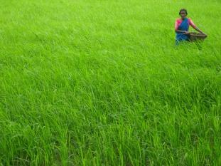 Farm_Life_Village_India